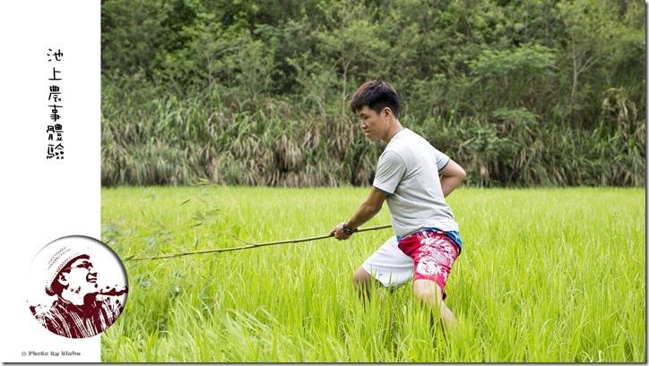 台東旅遊-莊稼熟了民宿-池上鋤禾趣